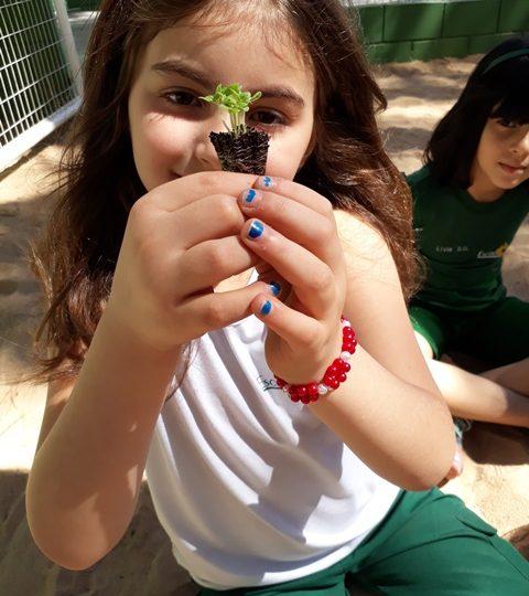 Projeto tempero natural – 1º ano A e D
