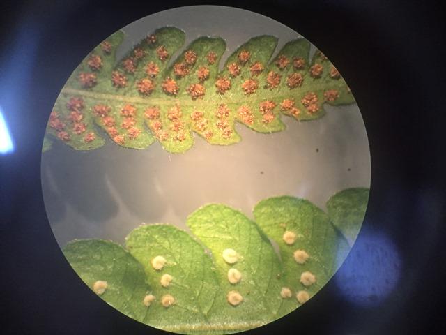 O encanto das plantas – 7º ano