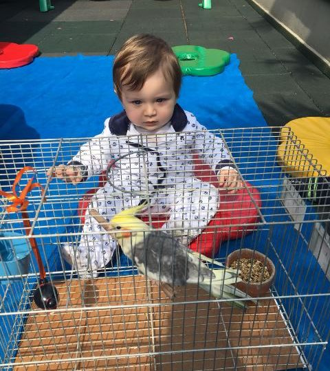 A visita do passarinho Toquinho! – Maternal 1