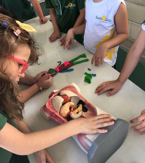 Explorando os órgãos do corpo – 1º ano C