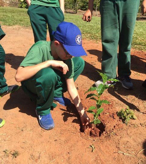 Fazenda do café: A história viva aos olhos dos alunos – 5º ano A manhã