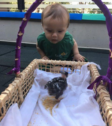 Maternal 1: Conhecendo o mundo animal!